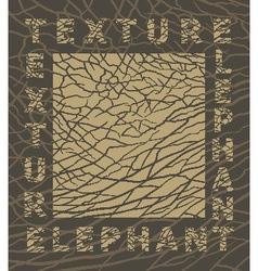 elephant skin texture vector image