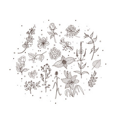 Floral botanical vector