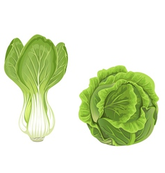 Head of green cabbage and lettuce vector image