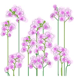 Purple orchids tile vector