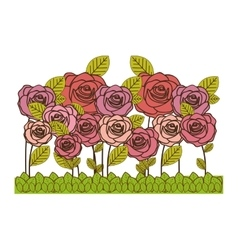rose flowers icon image vector image