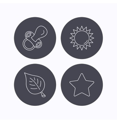 Leaf star and sun icons vector image