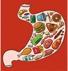 stomach full of fast food vector image