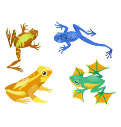 Frog cartoon tropical animal cartoon nature icon vector