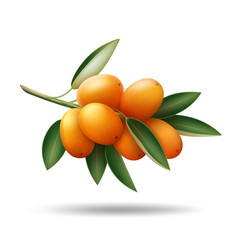 Kumquat branch with orange fruits and green leaves vector