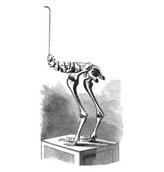 Moa skeleton vintage vector
