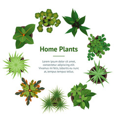 realistic detailed 3d top view green plants banner vector image