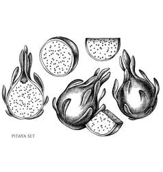 set hand drawn black and white pitaya vector image