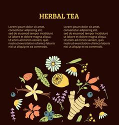 herbal tea article vector image