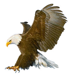 Bald eagle attack swoop on white vector