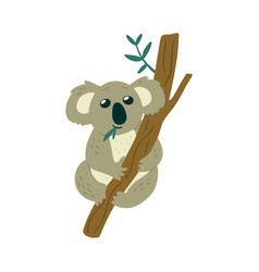cute koala bear sits on tree and eats leaves vector image