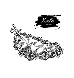 Kale hand drawn Vegetable engraved style vector image