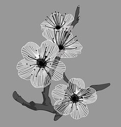 white orchid flowers vector image vector image