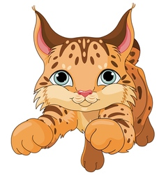 Lynx vector image
