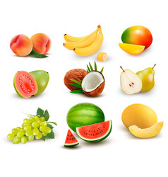 Collection fruit and berries watermelon vector
