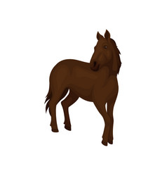 Gorgeous horse with dark brown coat long flowing vector