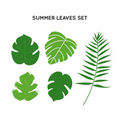 Tropical palm tree summer leaves set vector