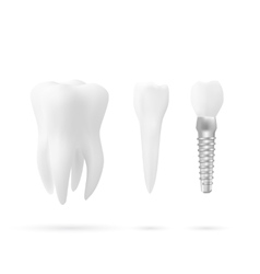set of tree tooth vector image