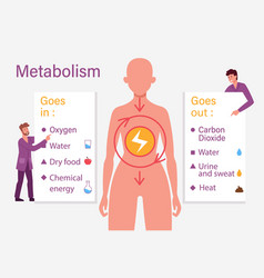 Biological diet infographic vector