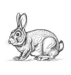 Hand drawn rabbit in engraving style vector