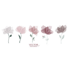 set classic floral collection vector image
