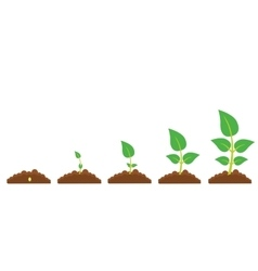 The phases of plant growth vector image