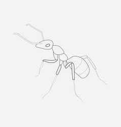 Ant icon line element of ant vector
