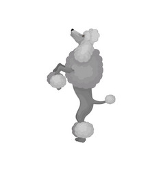 Lovely poodle standing on hind legs domestic vector