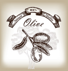 Olive tree branch hand drawn in sketch style vector
