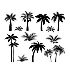 Silhouette palm trees set tropical black jungle vector