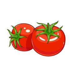Pair red ripe tomato vector image