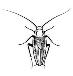 Cockroach design animal vector