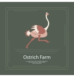 Logotype ostrich farm vector