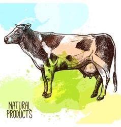 Cow Sketch vector image
