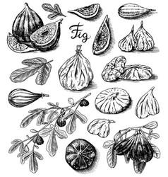 fresh figs set detox spice dried fruit cut vector image
