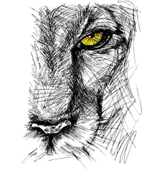 Hand drawn sketch a lion vector