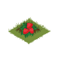 isometric cartoon fruit garden bed with vector image