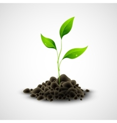 Plant sapling growing vector