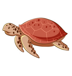 Sea turtle on white background vector