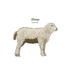 sheep sketch style vector image