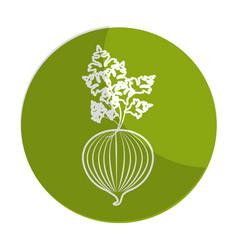 sticker fresh onion with plant organ food vector image
