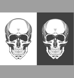 vintage monochrome highly detailed skull vector image