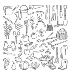 hand drawn tools for farming and gardening doodle vector image