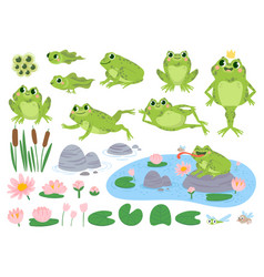 cartoon frogs green cute frog egg masses vector image