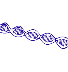 Dna spiral isolated on white sketch vector