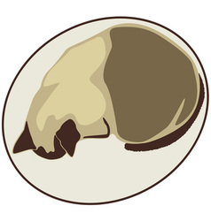 Kitty in Oval vector image