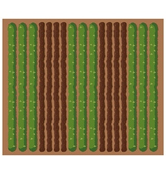 Top view of crops on the farm vector