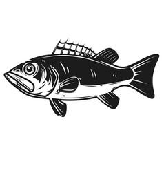 sea bass icon perch design element for logo vector image vector image