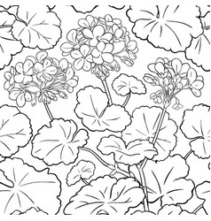 geranium pattern vector image