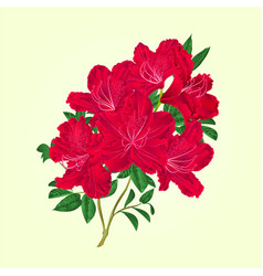 Twig red rhododendron flowers and leaves vector